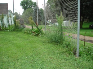 08-20-2018IV CITY PARK BASEBALL BACK STOP WEEDS
